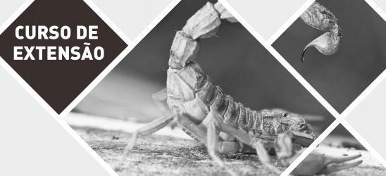 Extensão em Escorpionismo
